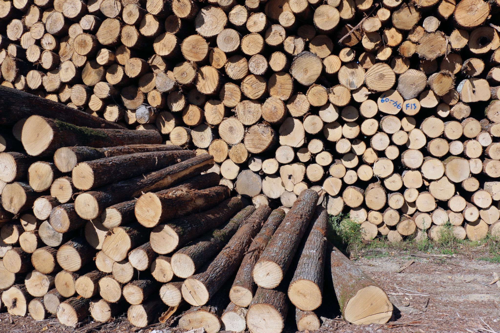 A pile of logs ready to be made into shims